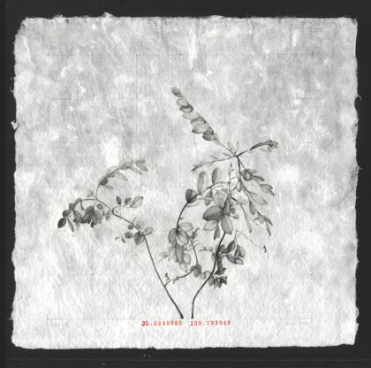 Portfolio image of Louise Rouse's artwork, graphite drawing on paper